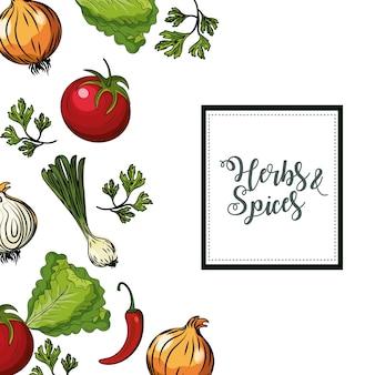 Kruiden en specerijen planten en orgel voedsel achtergrond