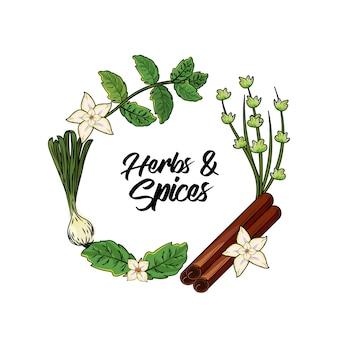 Kruiden en specerijen planten en orgelvoer