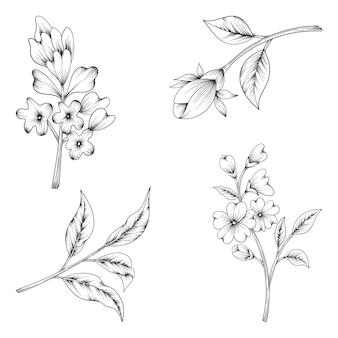 Kruiden en wilde bloemen en bladeren op wit wordt geïsoleerd