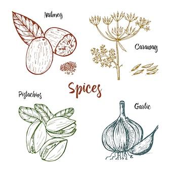 Kruiden, specerijen en kruiden. nootmuskaat en pistachenoten en knoflook, karwij en zaden voor het menu.