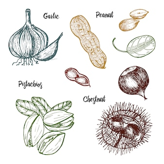 Kruiden, specerijen en kruiden. pistachenoten en knoflook, pinda en kastanje, zaden voor het menu.
