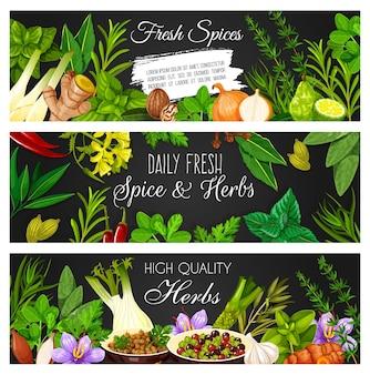 Kruiden, specerijen en kruiderijen banners. vector oregano, basilicum en gember, marjolein, ui en dragon, tijm, saffraan en koriander, koriander, peperkorrels en wasabi, knoflook, bonenkruid en kurkuma, limoen