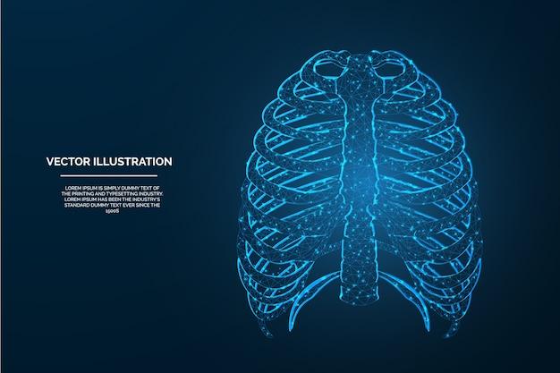 Laag poly ontwerp - veelhoekig menselijk lichaamsdeel borstkooi draadframe ontwerp