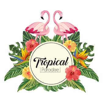Label met flamingo's, dieren en bloemen met bladeren
