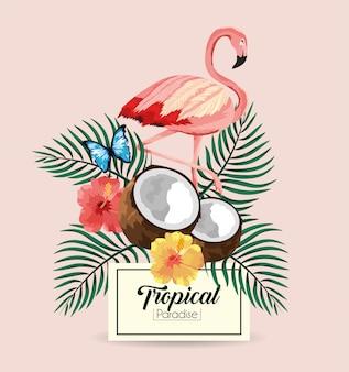 Label met vlaamse en tropische kokosnoot met vlinder