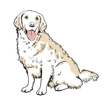 Labrador retriever handschilderij