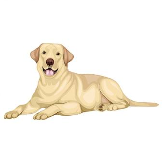 Labrador retriever hond illustratie