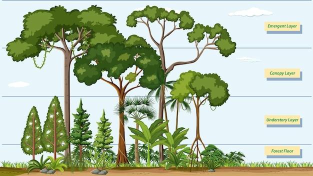 Lagen van een regenwoud met naam