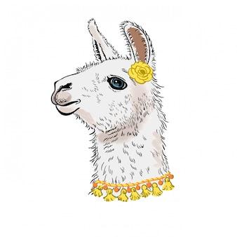 Lama, alpaka. getrokken lama hoofdportret, illustratie.