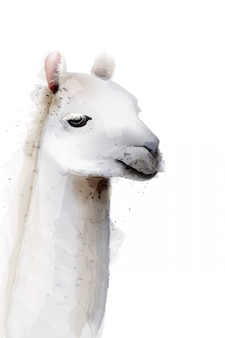 Lama aquarel illustratie
