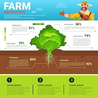 Landbouw infographics eco-vriendelijke organische natuurlijke plantaardige groei boerderij productie banner