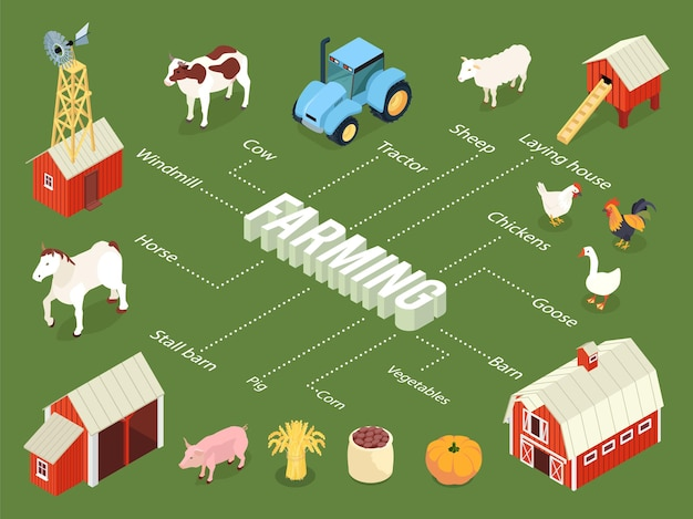 Landbouw isometrisch stroomdiagram met boerderij kraam schuur kippen leg huis tractor vee groenten gewassen windmolen
