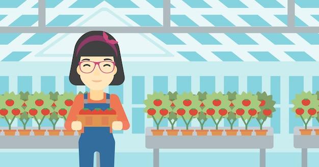 Landbouwer die tomaten verzamelt