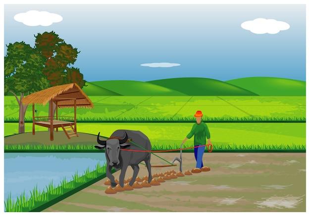 Landbouwer ploeg op rijstveld