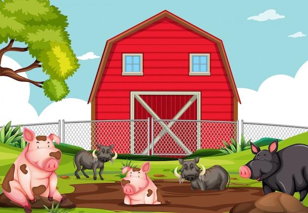 Landbouwhuisdier bij landbouwgrond
