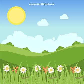 Landschap achtergrond met madeliefjes en mooie zon