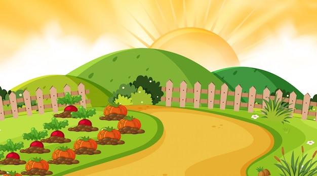 Landschapsachtergrond van moestuin bij zonsondergang