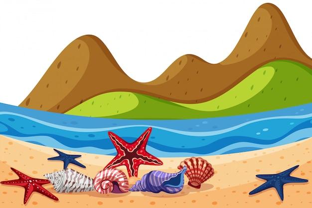 Landschapsachtergrond van zeeschelpen en zeester op strand