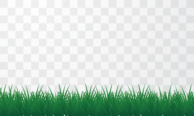 Lang gras dat voor de lenteachtergrond wordt gebruikt
