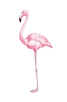 Lange benen roze flamingo vectorillustratie. hand getekende exotische vogel geïsoleerd op een witte achtergrond. zijaanzicht van realistische afrikaanse vogel met roze veren. tropische dieren in het wild, fauna. Premium Vector