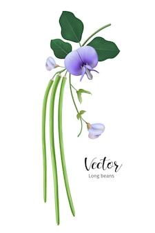 Lange bonen met bladeren en bloem realistisch