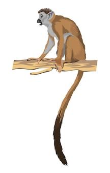 Lange staart makaak of kleine aap op tak. geïsoleerd op witte achtergrond