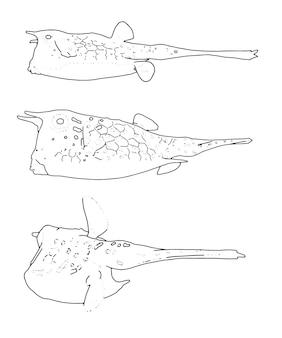 Lange staart vis set lineaire schets doodle