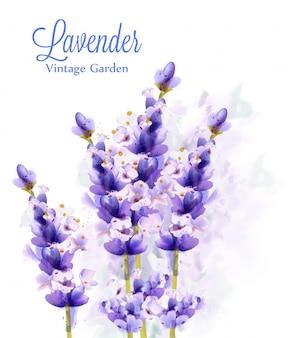 Lavendel aquarel achtergrond