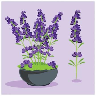 Lavendel bloemen elementen
