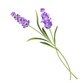 Lavendel elegante kaart.