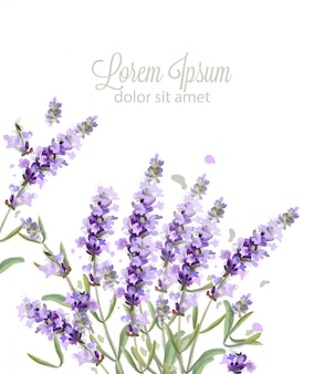 Lavendel kaart aquarel