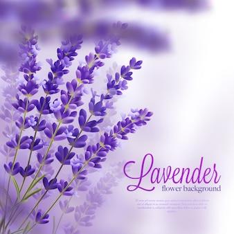 Lavendel takken realistische achtergrond