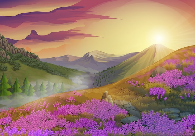 Lavendel, zomeravond landschap, vectorillustratie