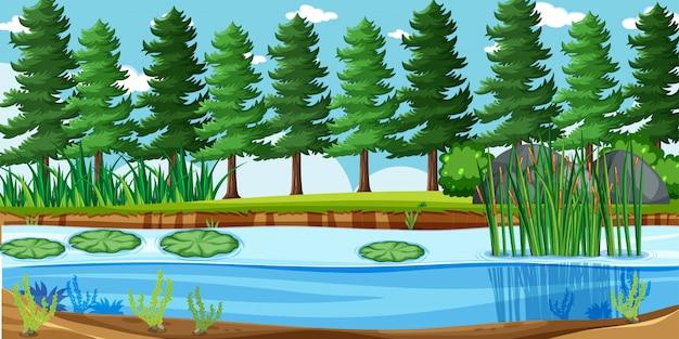 Leeg landschap in de scène van het natuurpark met veel pijnbomen en moeras