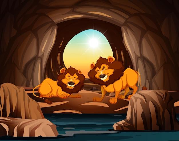 Leeuw die in de grot woont