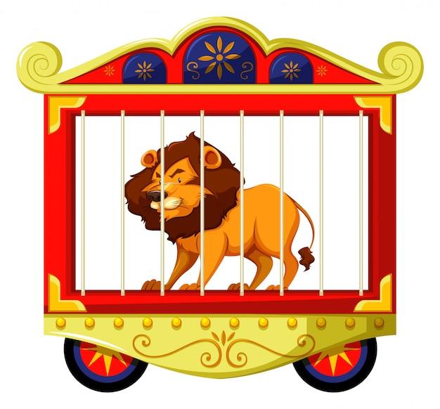 Leeuw in circus kooi