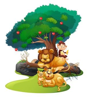 Leeuwfamilie en aap in bos