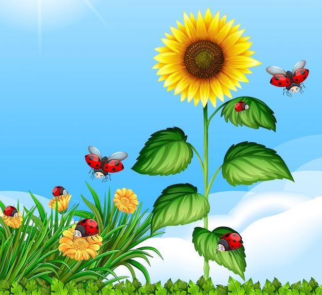 Lege scène met lieveheersbeestjes in de tuin met grote zonnebloem overdag
