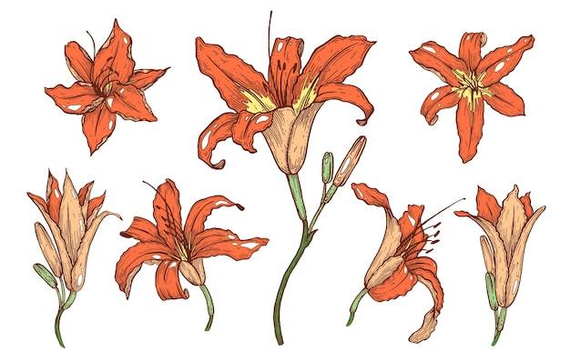 Lelies bloemen set