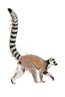 Lemur van een scheutje aquarel.