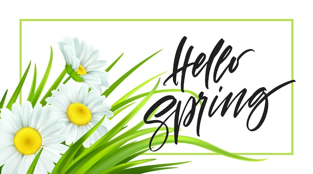 Lente achtergrond met madeliefjes en vers groen gras. hallo lente handschrift belettering. illustratie
