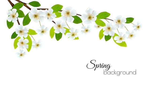 Lente achtergrond met witte bloemen. vector.