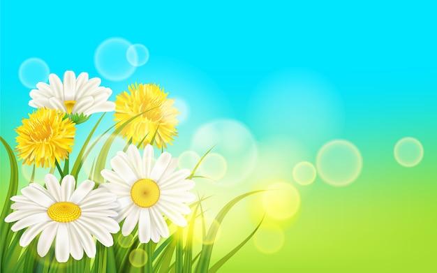 Lente bloem madeliefje sappig, kamilles gele paardebloemen groen gras