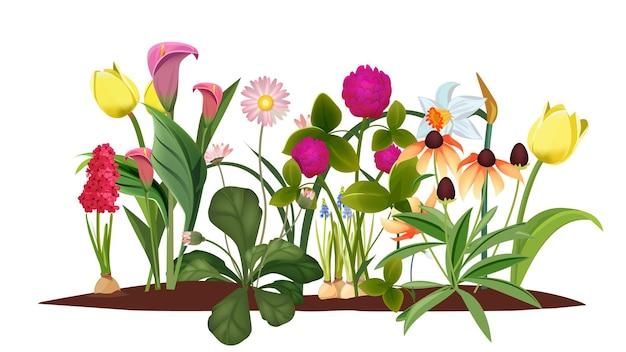 Lente bloembed. tuin, bloesembloemen. geïsoleerde tulpen en lelieillustratie.