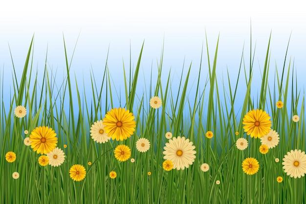Lente gras en bloemen grens, pasen wenskaart decoratie-element. lente of zomer achtergrond, zonnige dag met bloemen en gras