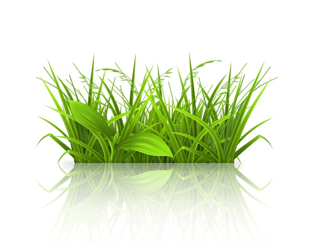 Lente gras, zomertijd, realistisch