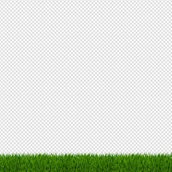 Lente groen gras grens