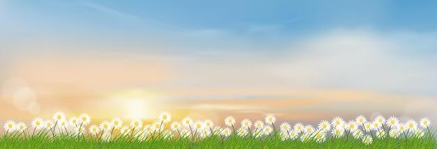 Lente landschap met ochtendhemel en groene grasvelden