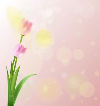 Lentebloemen, roze tulp op roze achtergrond. copyspace
