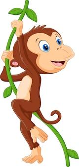 Leuke aap die in een boom hangt